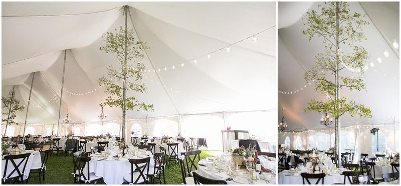 """Trees """"growing"""" inside the tent!"""