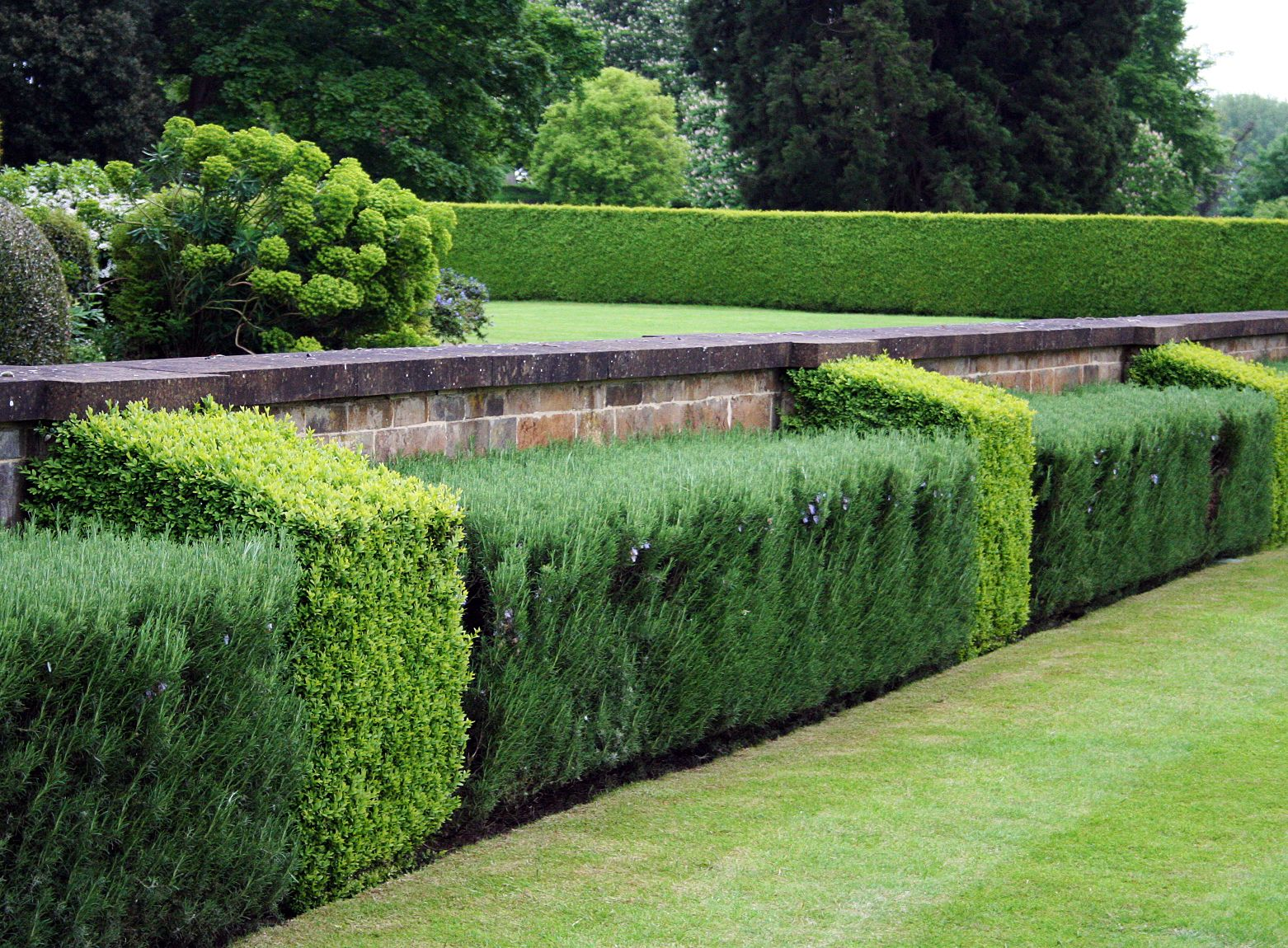 Topiary hedge using rosemary and buxus | Urban garden ...