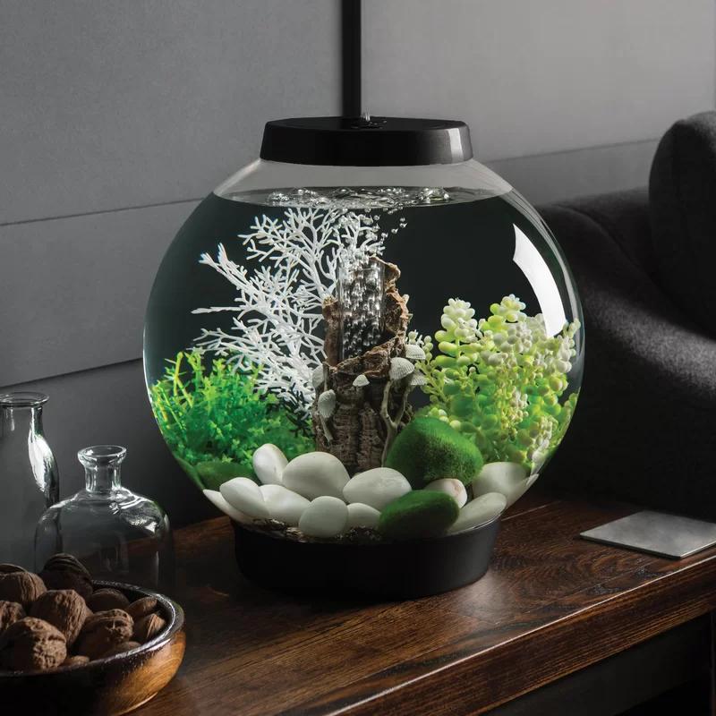 Biorb 4 Gallon Round Aquarium Tank Fish Tank Biorb Desktop Aquarium