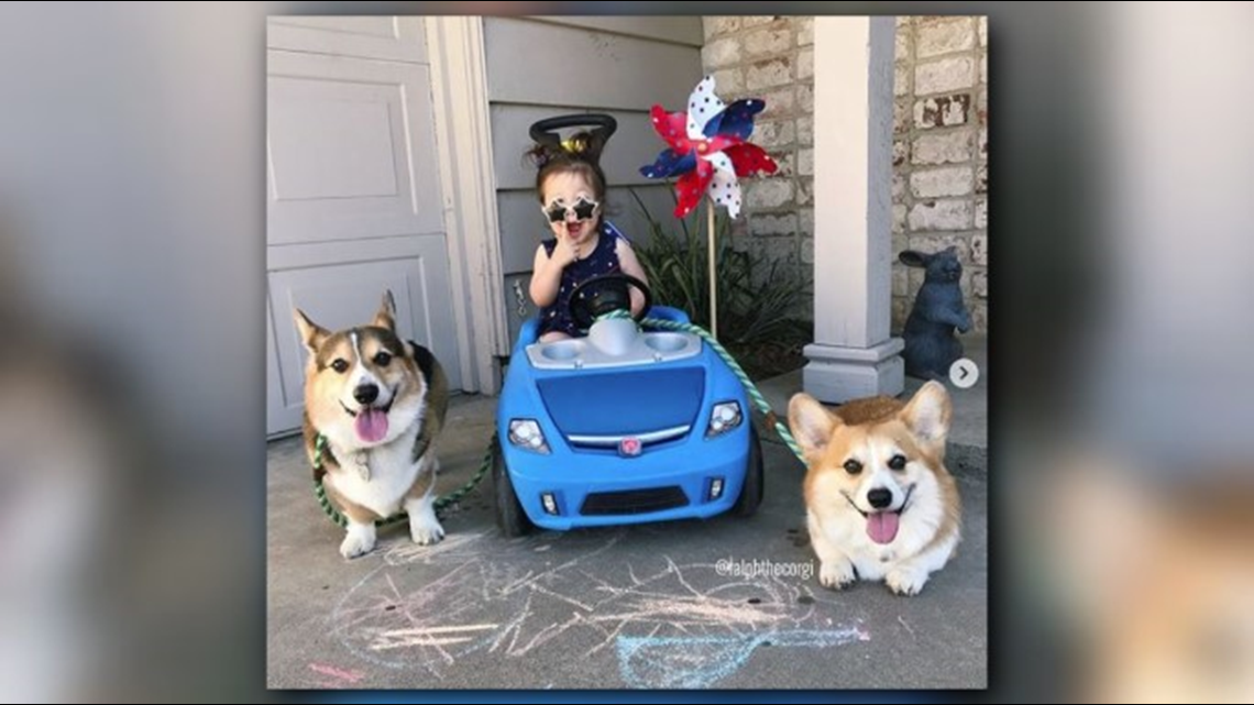 Sacramento Is Home To One Of California S Very Own Dog Celebrities Ralph The Corgi And His Brother George Have More Than 400 000 Followe Corgi Dogs Animals