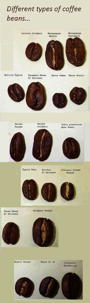 Coffee Beans Locations Ground Coffee Shelf Life Coffee Recipes Types Of Coffee Beans Coffee Beans