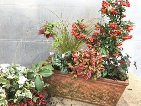 Composizione in vaso di piante invernali sempreverdi ...