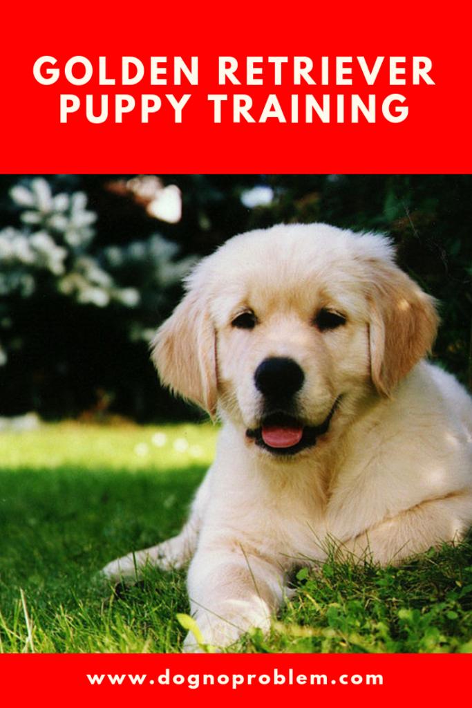 Golden Retriever Puppy Training Beau Retriever Puppy Dogs