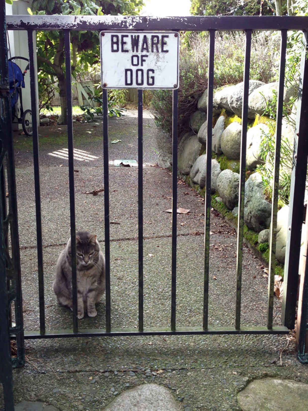 Ferocious Dogs Posing Beside Their Beware Of Dog Signs Dog - 18 ferocious dogs posing beside their beware of dog signs
