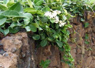 plante grimpante interieur plante