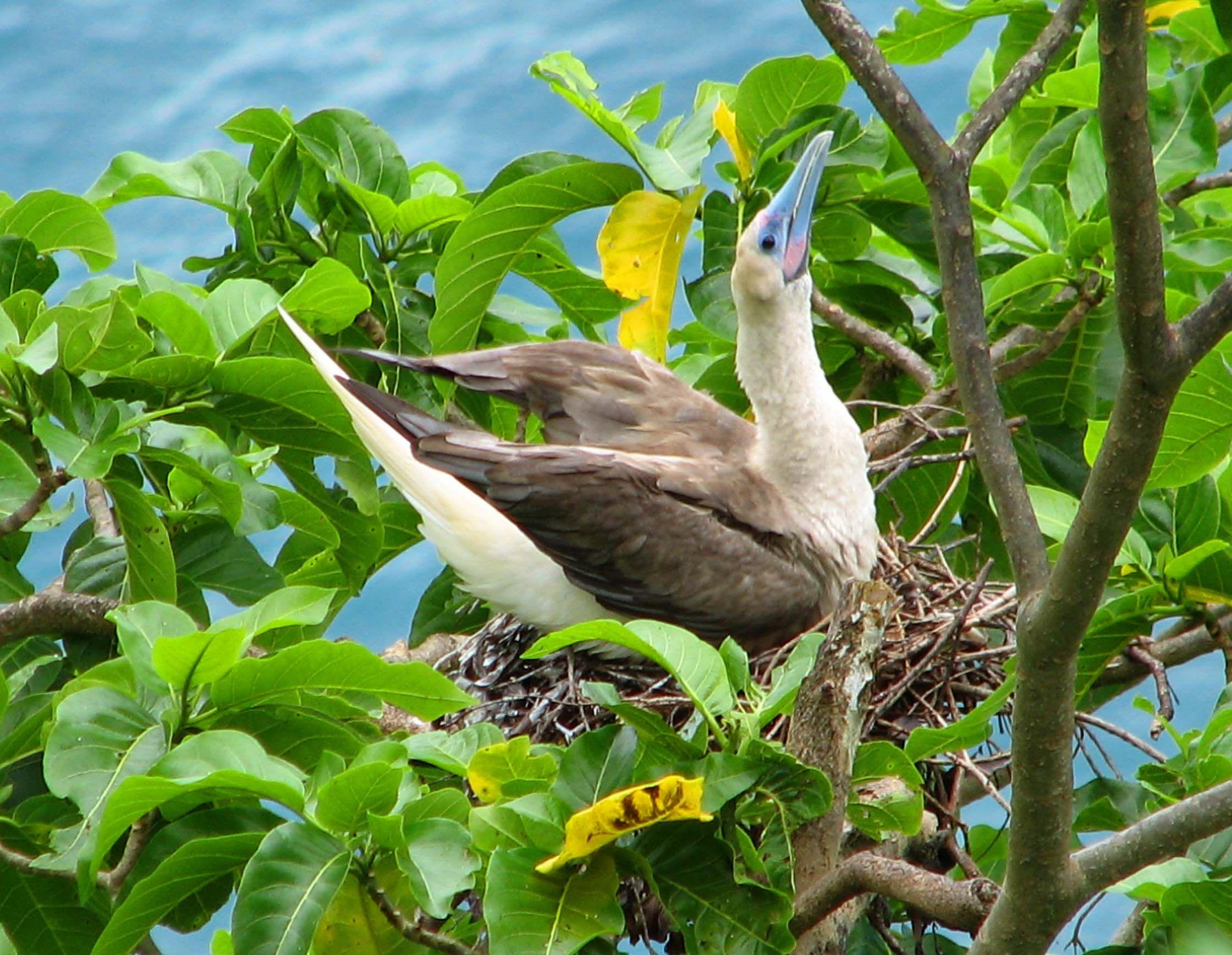 American Samoa Wildlife – Dwit Blog