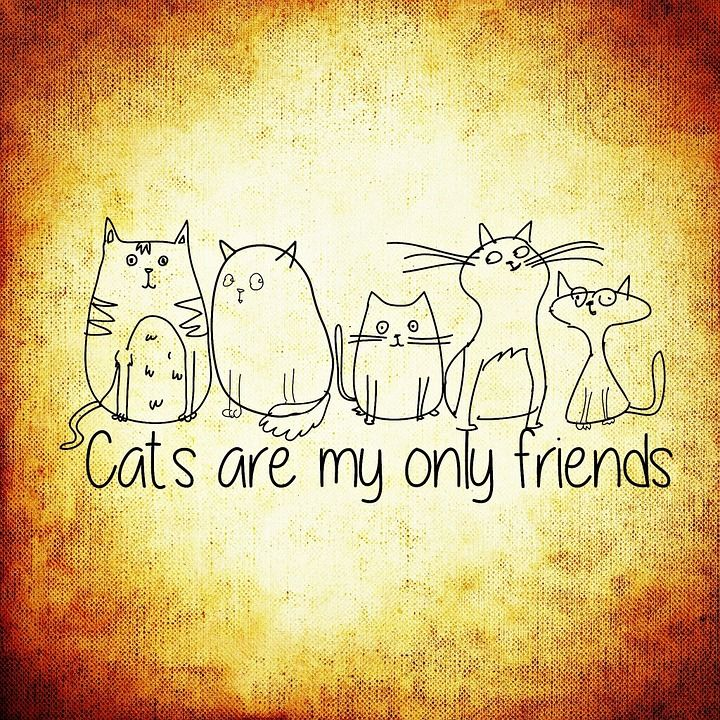 Free Image On Pixabay Cat Friends Funny Dear Animals Funny