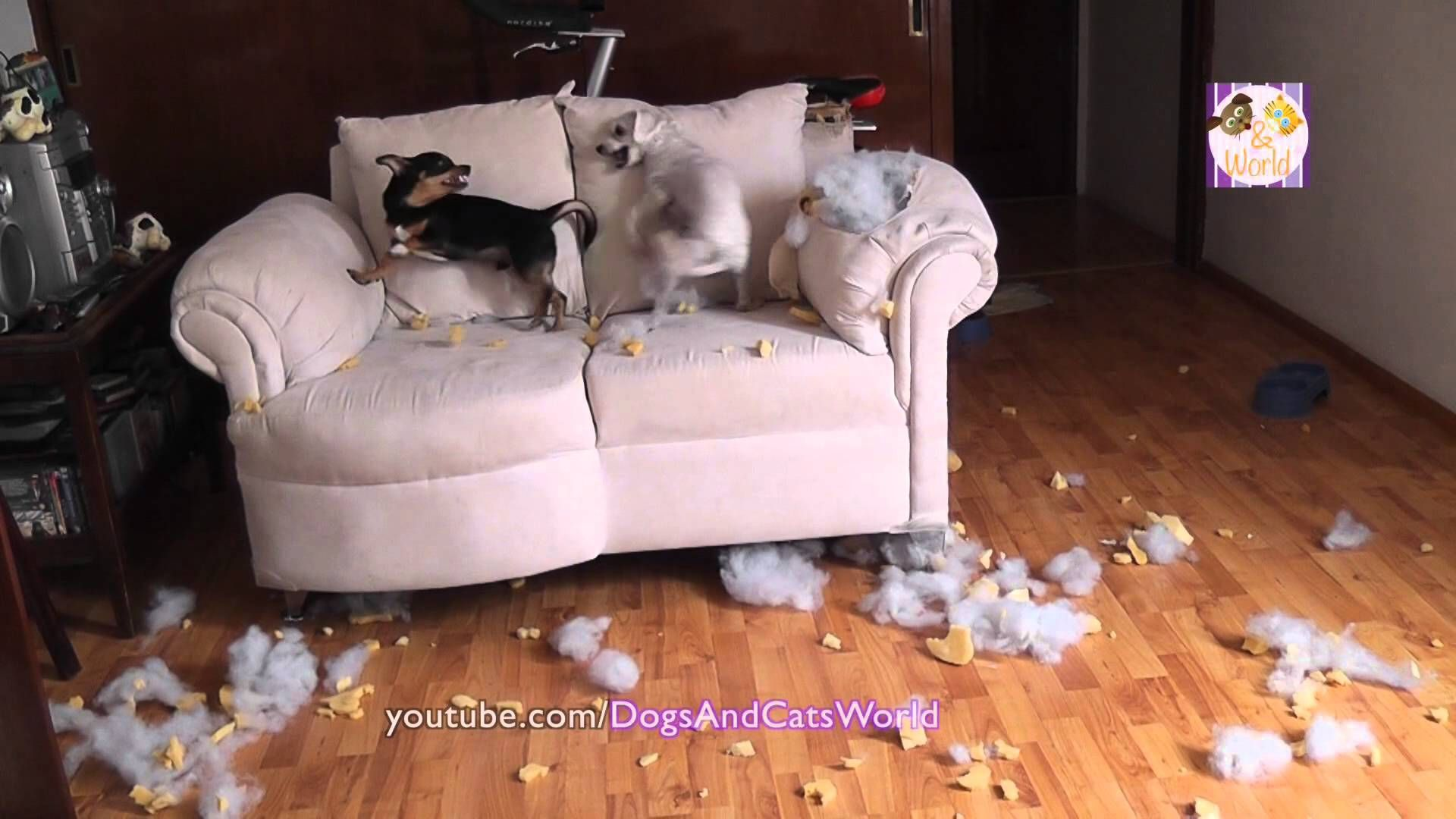 Chewed Up Couch Google Search Chewed Up Couch Pinterest  # Muebles Sleeping Dogs
