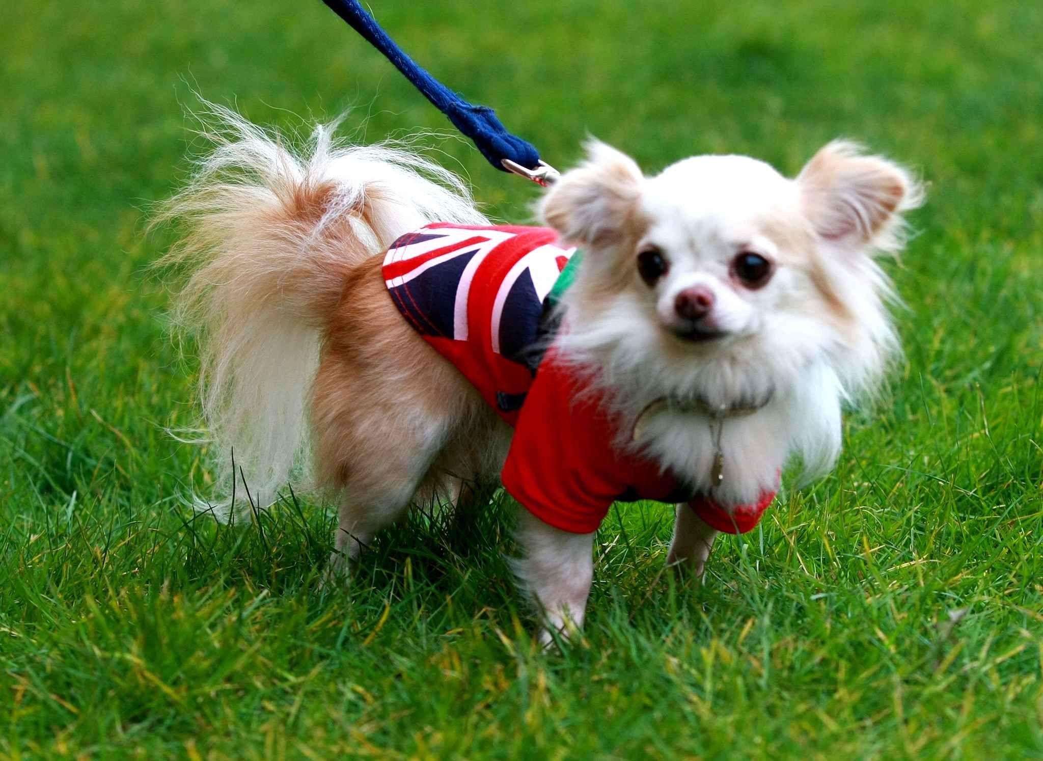 Cutest Dog In The World Guinness 2012 best 10+ worlds biggest dog ideas on pinterest   biggest dog, big