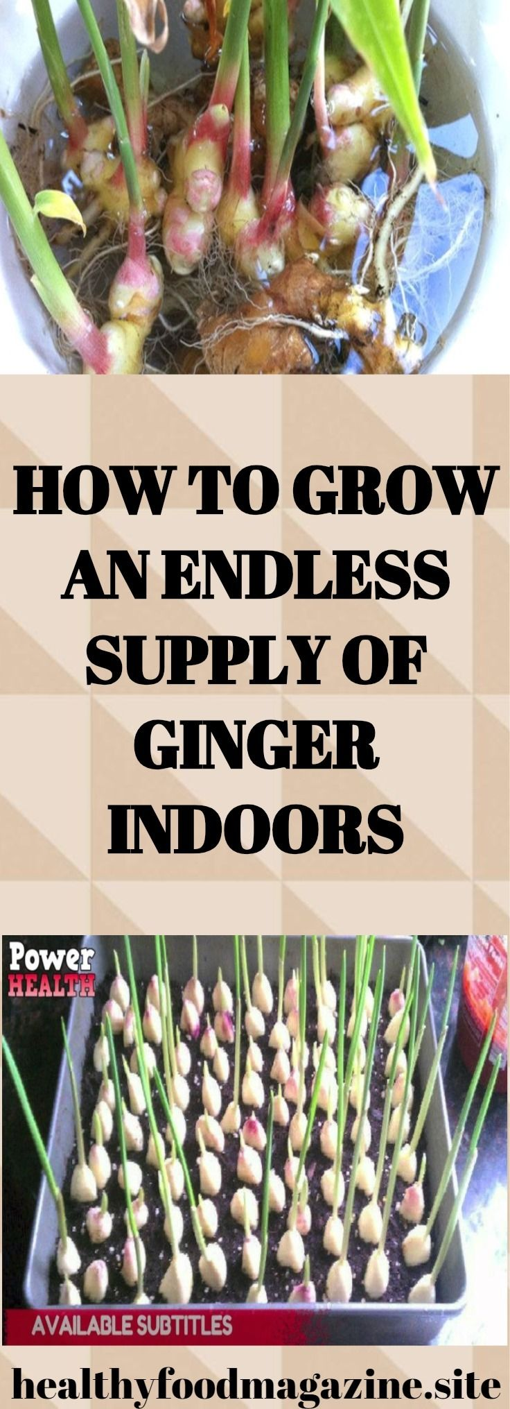 How To Grow An Endless Supply Of G*Ng*R Indoors – Healthy 400 x 300