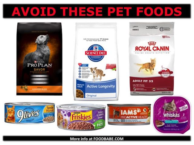 Are You Feeding Your Pets Roadkill Carcinogens Moldy Grains