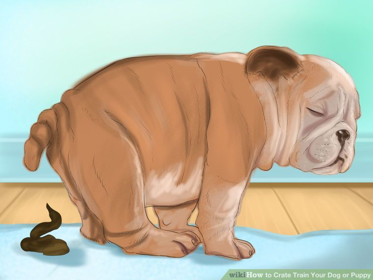 6 Ways To Crate Train Your Dog Or Puppy Wikihow Train That