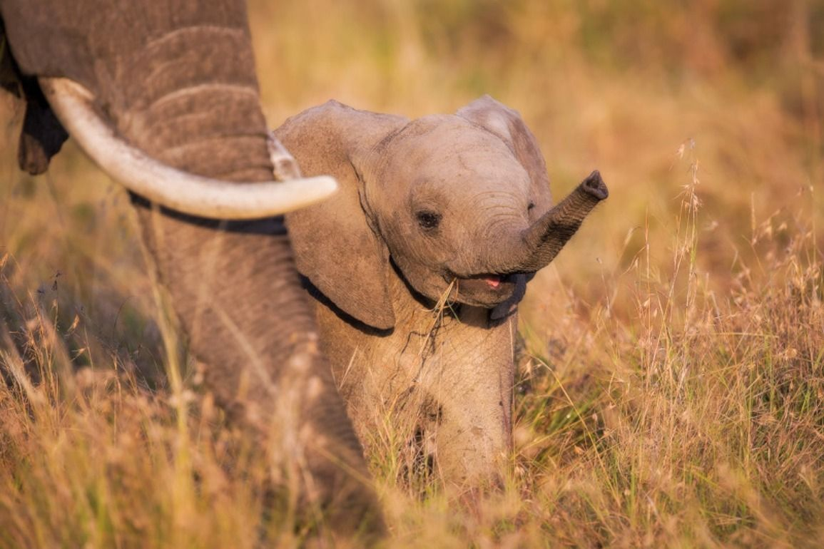 elephant images free download i | wallpapers | pinterest | baby