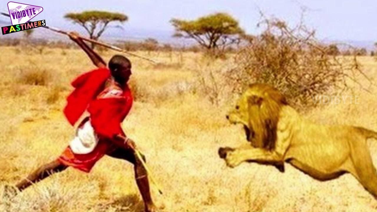 National Geographic! Lions Man vs Lion Who wins ...