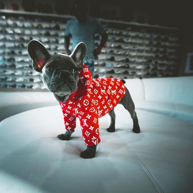 Supreme x LV Dog Hoodie - Red | dogg | Dog hoodie, Dog wear
