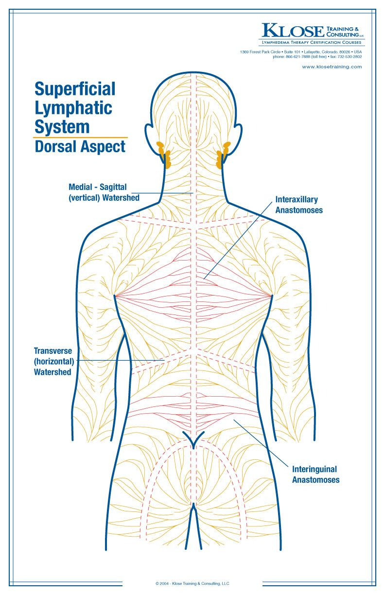 Manual Lymphatic Drainage Massage | Drenagem Linfática | Pinterest