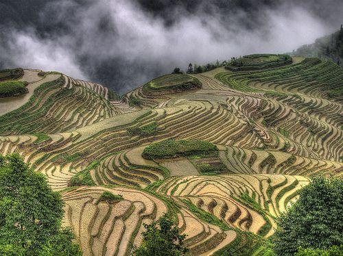 LongJi Terrance, Guilin, Guangxi, China.