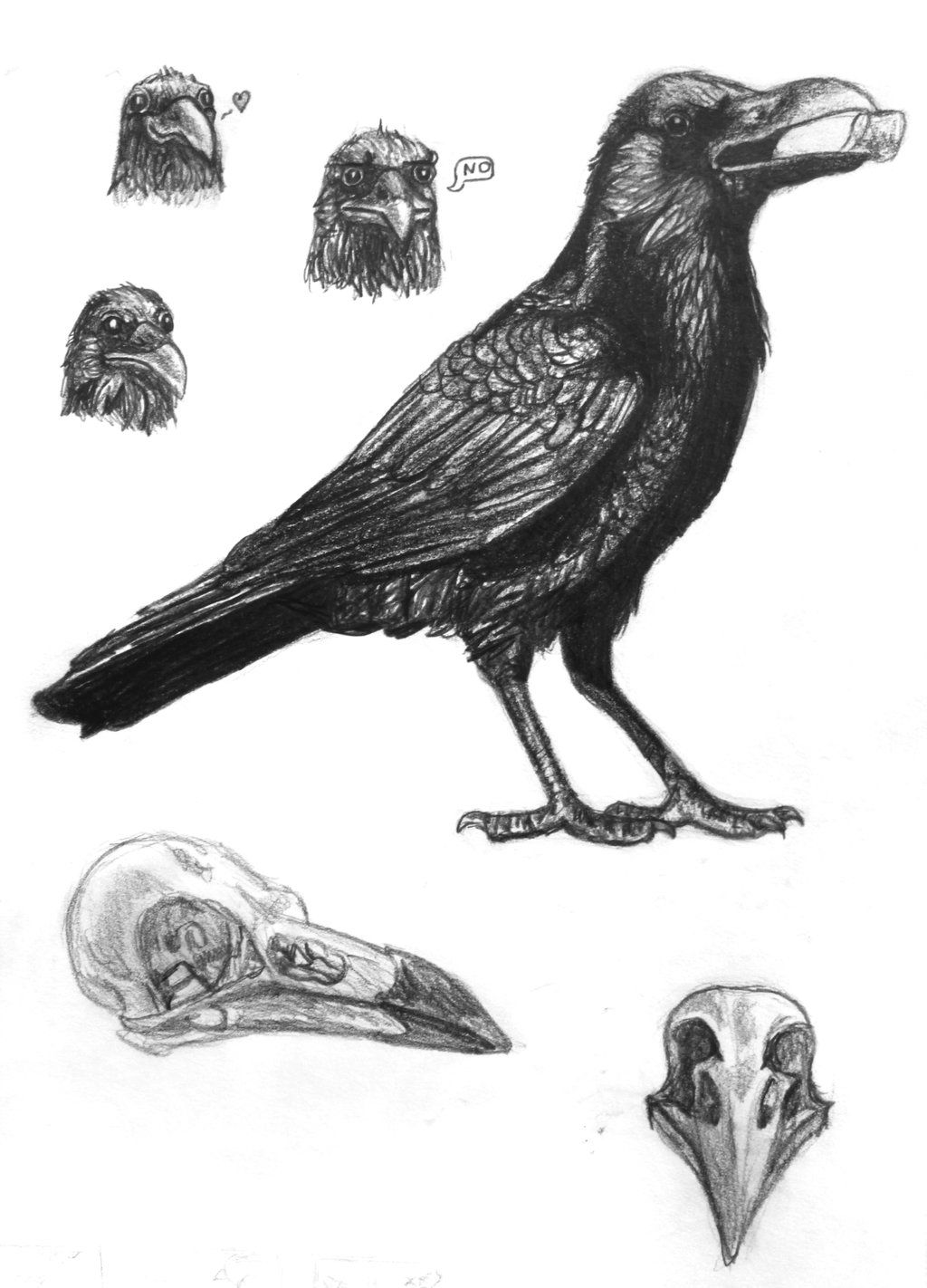 crow flying drawing