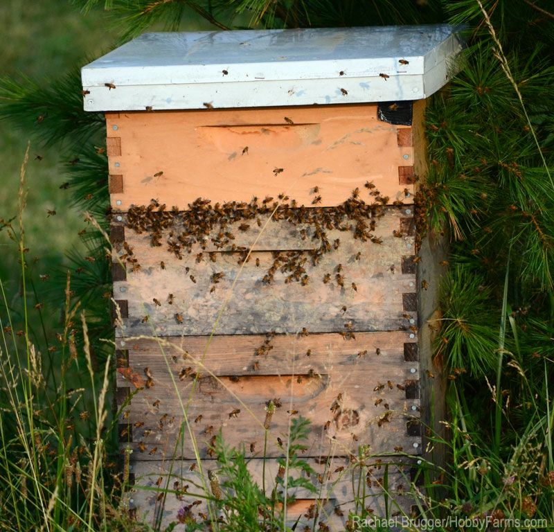 Take a holistic approach to beekeeping to encourage bee health and harvest better-quality honey.