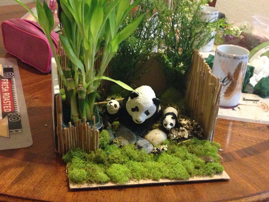 Panda Habitat School Pinterest Habitats Panda