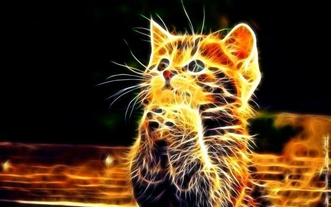 Praying Cat Free Wallpapers High Resolution Wallpaper Praying Cat