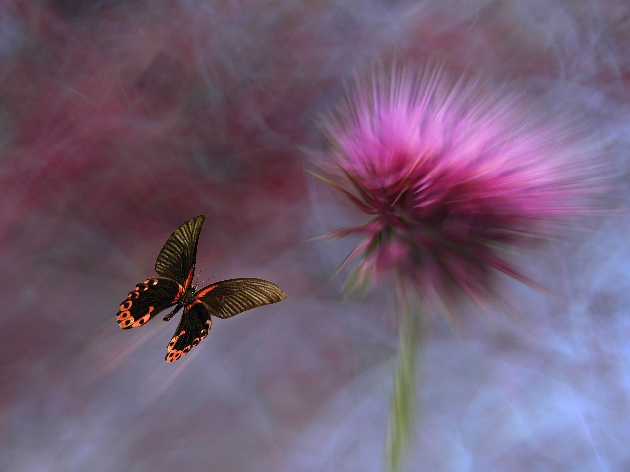Pin by eleftheria d on butterflies pinterest