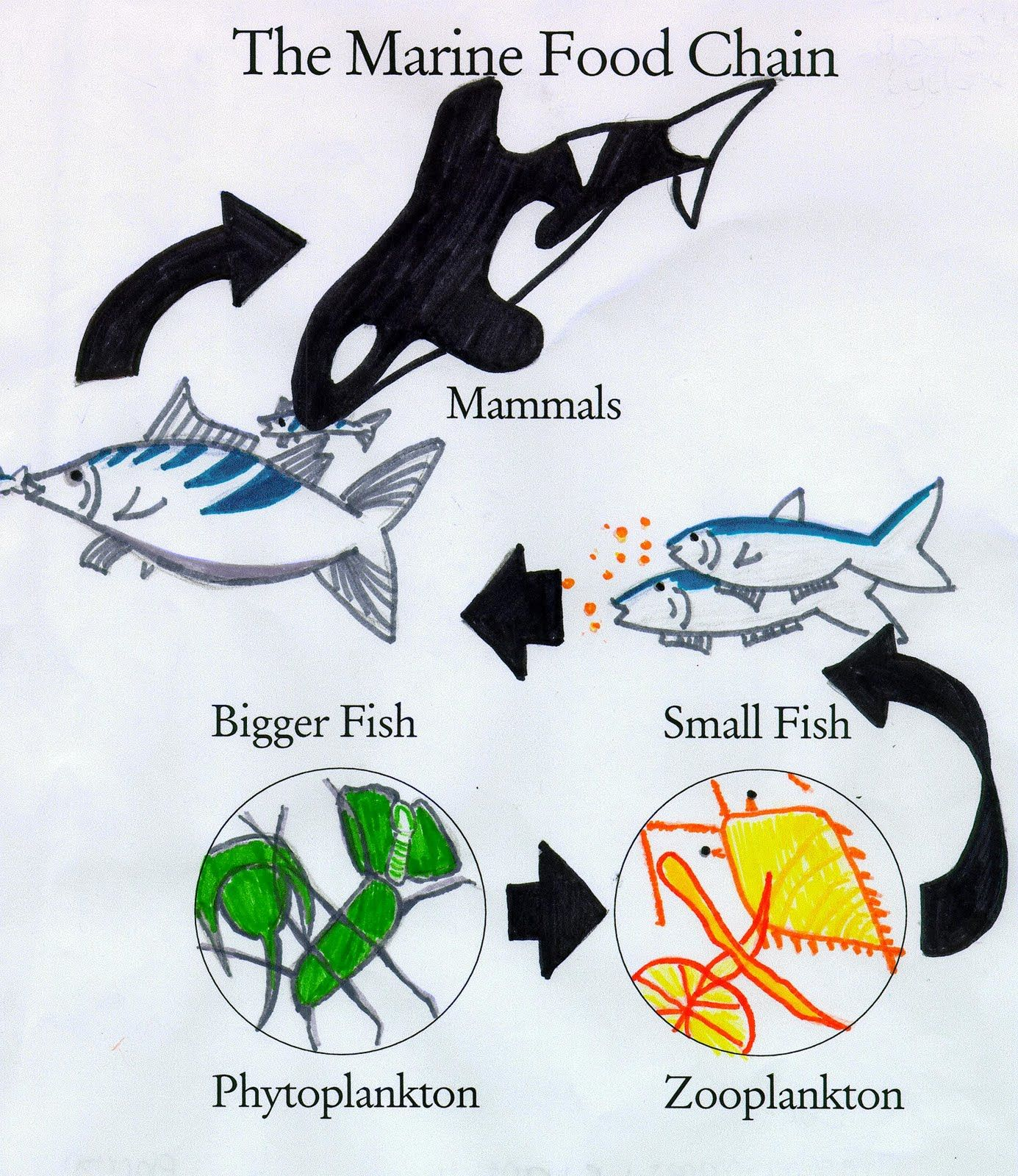 An Ocean of Food Chains and Food Webs Sea Earth