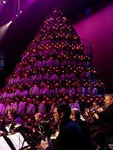 Singing Christmas Tree Edmonton.Edmonton Singing Christmas Tree Living Christmas Tree
