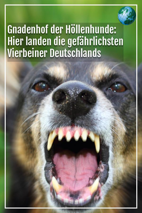 Gnadenhof Der Hollenhunde Hier Landen Die Gefahrlichsten