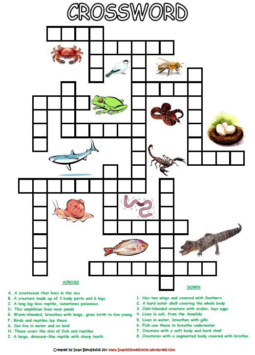 Animal Classification Activity Worksheets – Biology Classification Worksheet