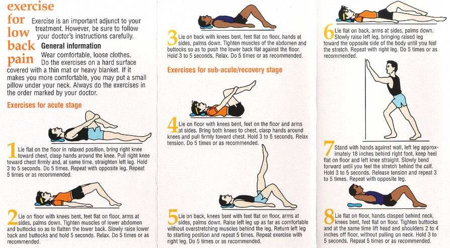 Therapy Exercises For Lower Back on Pinterest | Back Pain Exercises ...