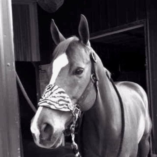 """""""the outside of a horse is good for the inside of the soul""""<3"""