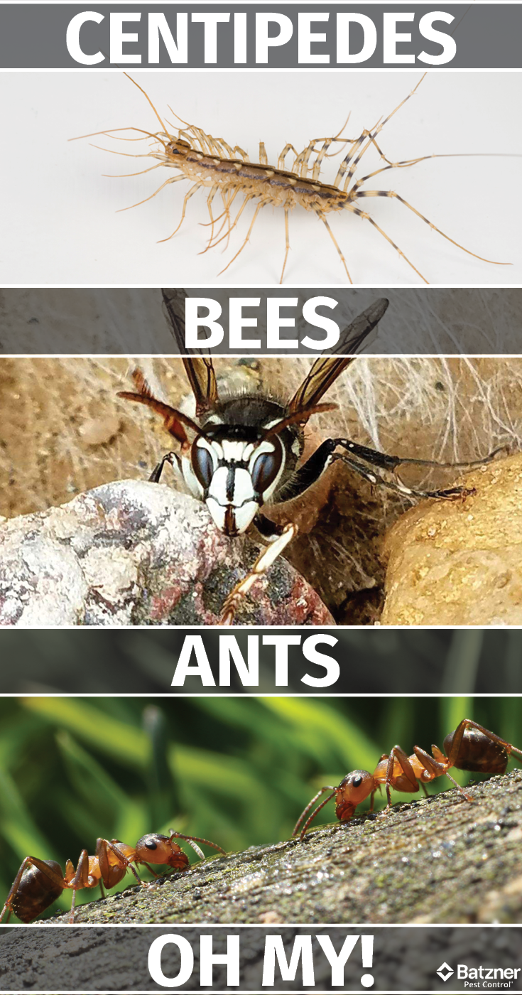 Learn about the 10 of the deadliest insects in the world