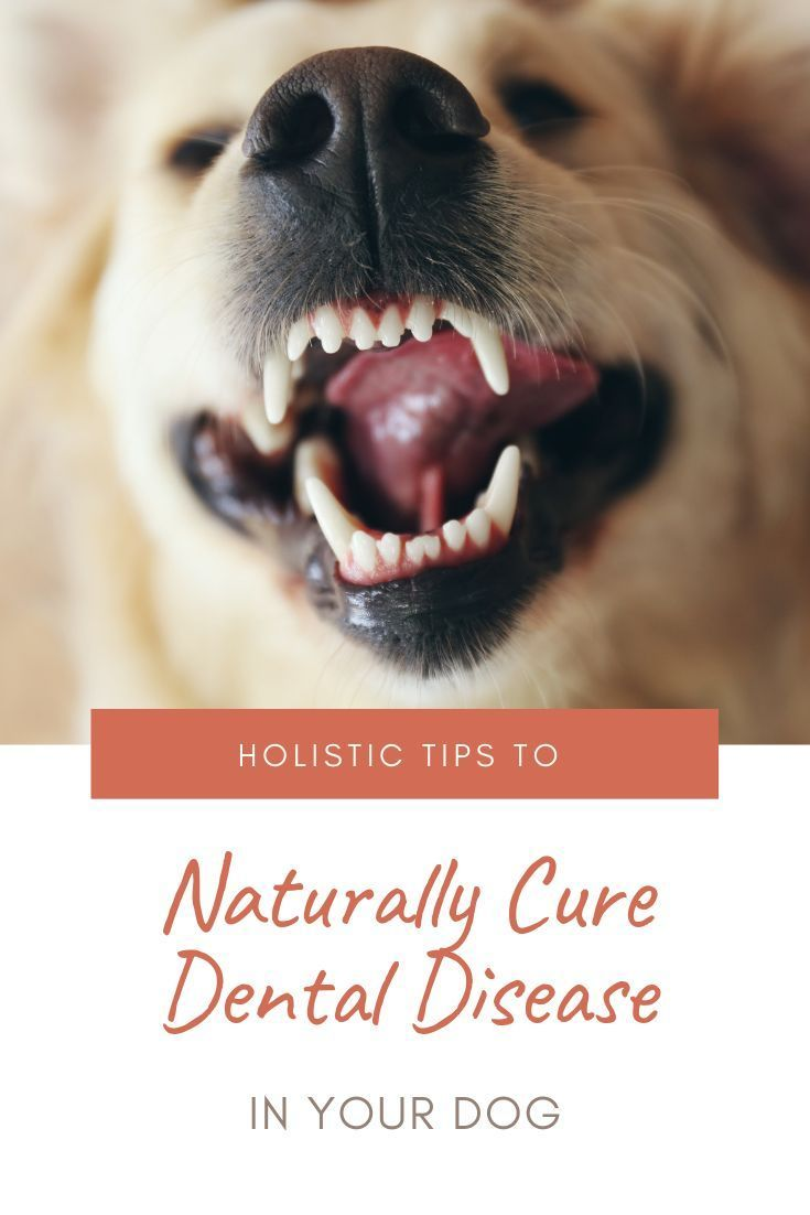 Nature has multiple ways to keep your dog's teeth clean ...
