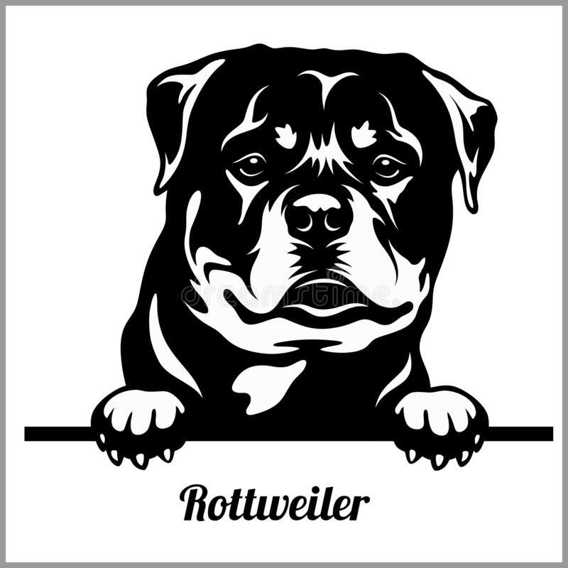 Rottweiler - Peeking Dogs - Breed Face Head Isolat