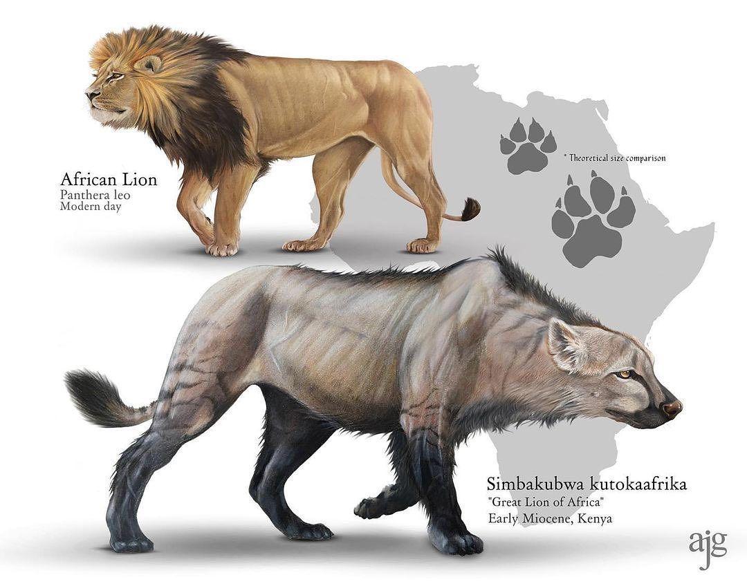 Lion Wolf Size Comparison - Videos Laughs