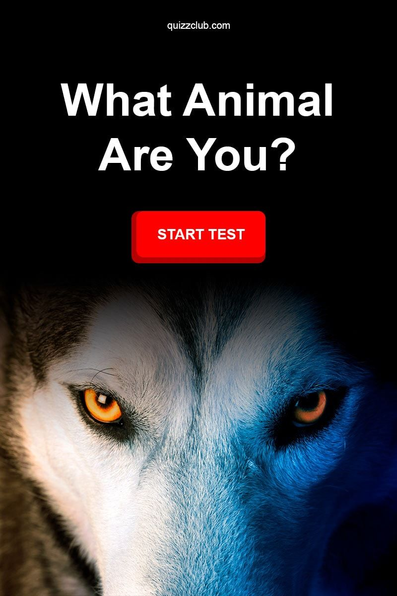 11+ What animal are you test ideas in 2021