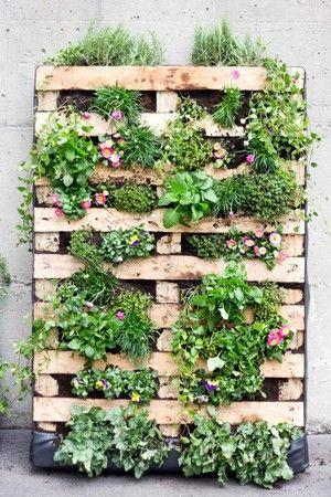 die grüne palette: vertikale bepflanzung einer europalette, Garten und erstellen