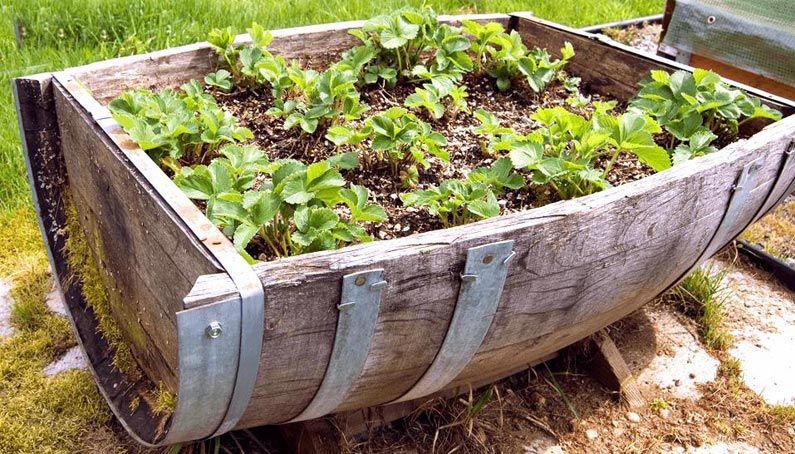 Hochbeetfreunde Alles Rund Um S Hochbeet Weinfass Garten Garten Topf Und Kubelpflanzen