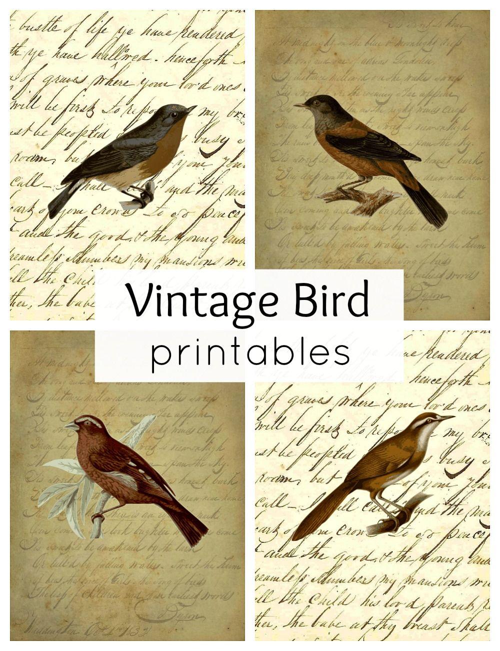 Vintage Bird Printables For Fall Vintage Birds Birds Vintage