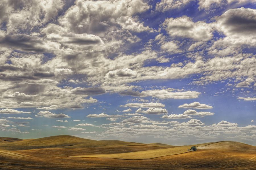 Palouse Harvest by Michael Brandt, via 500px
