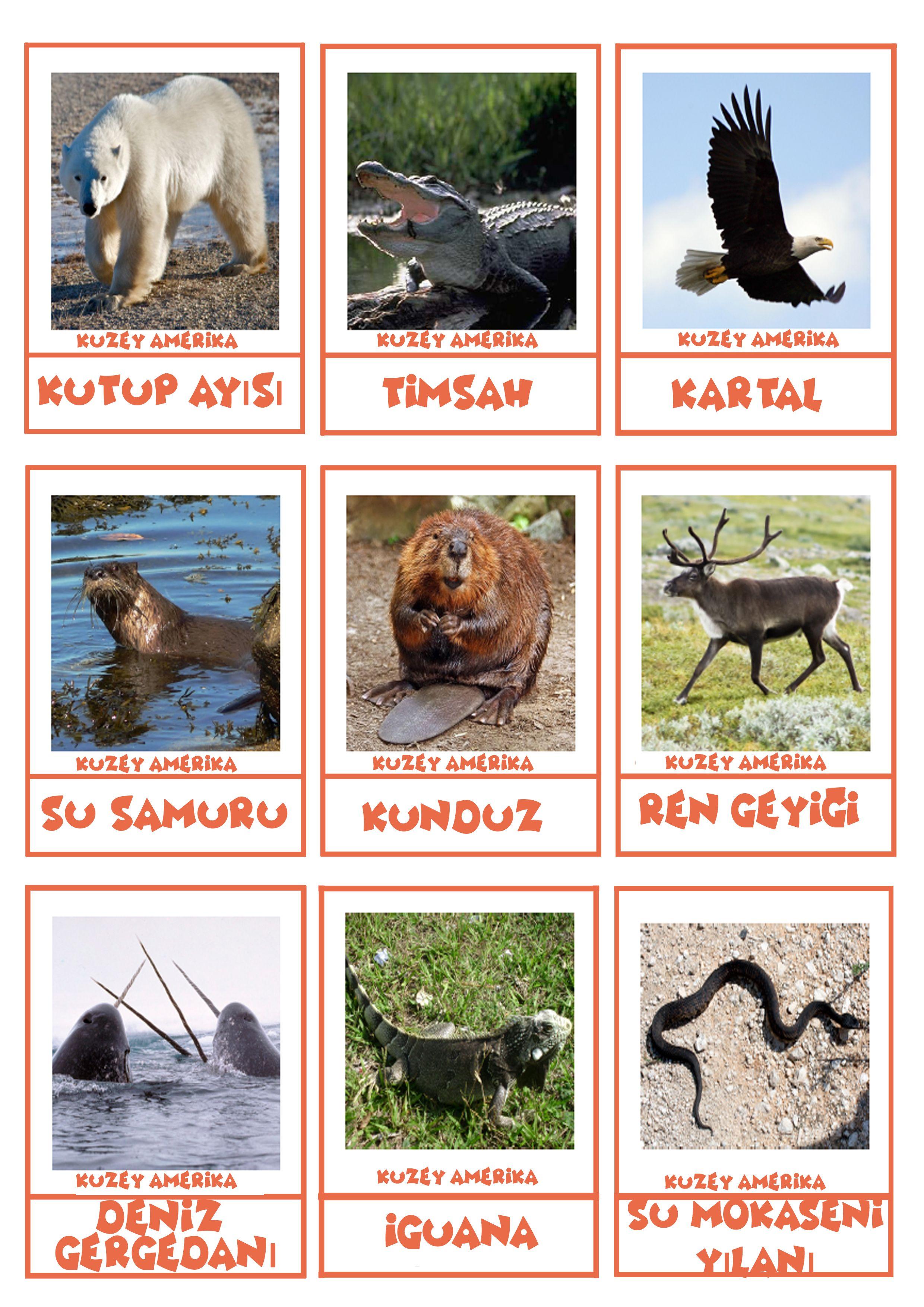 Kıtalar Ve Hayvanları Kıtalar Ve Hayvanları Montessori School