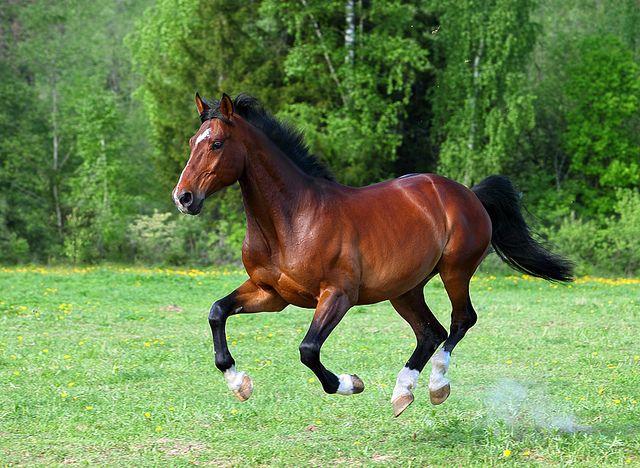 U414 Flickr Photo Sharing Horse Coat Colors Horses Bay Horse