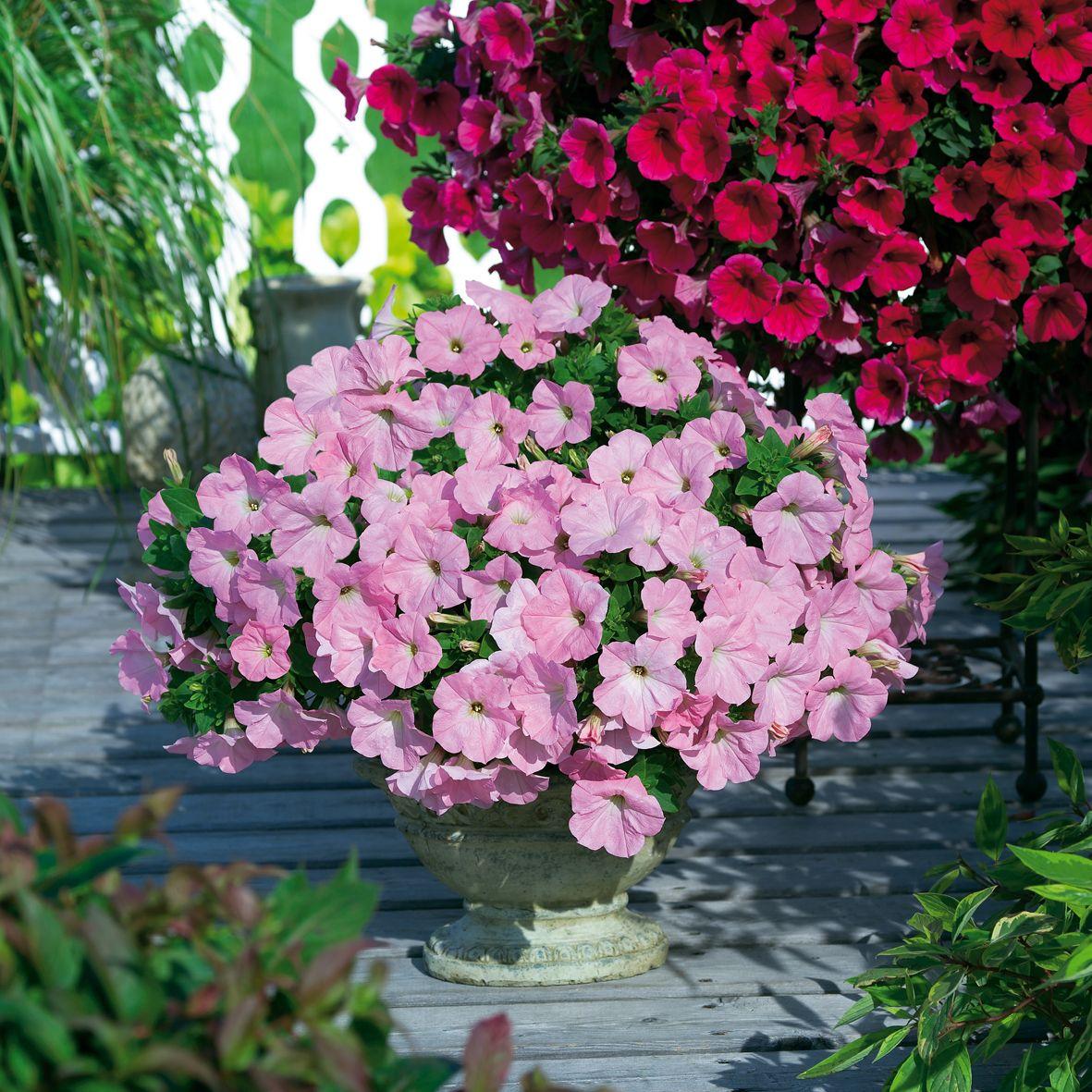 Balkonpflanzen Bilder Grabbepflanzung Einzelgrab