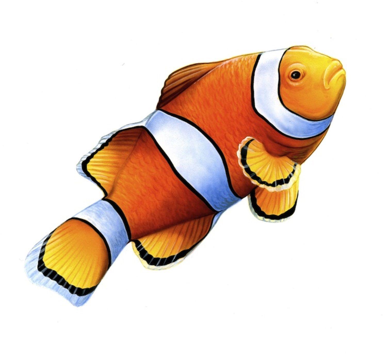 Art Illustration Oceans Seas Percula Clownfish Amphiprion