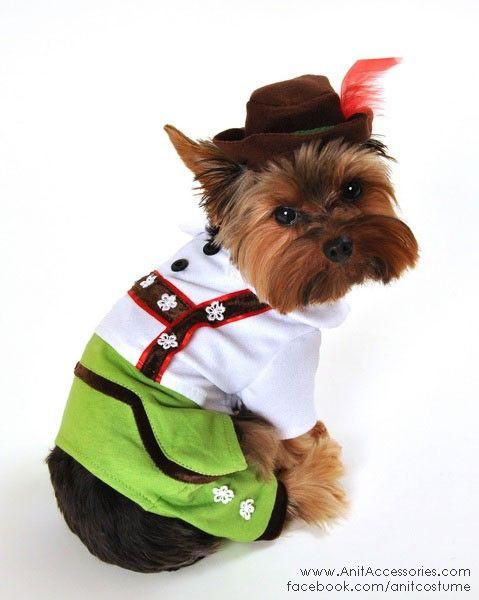 Beer Boy Dog Halloween Costume 26 99 Cute Hilarious