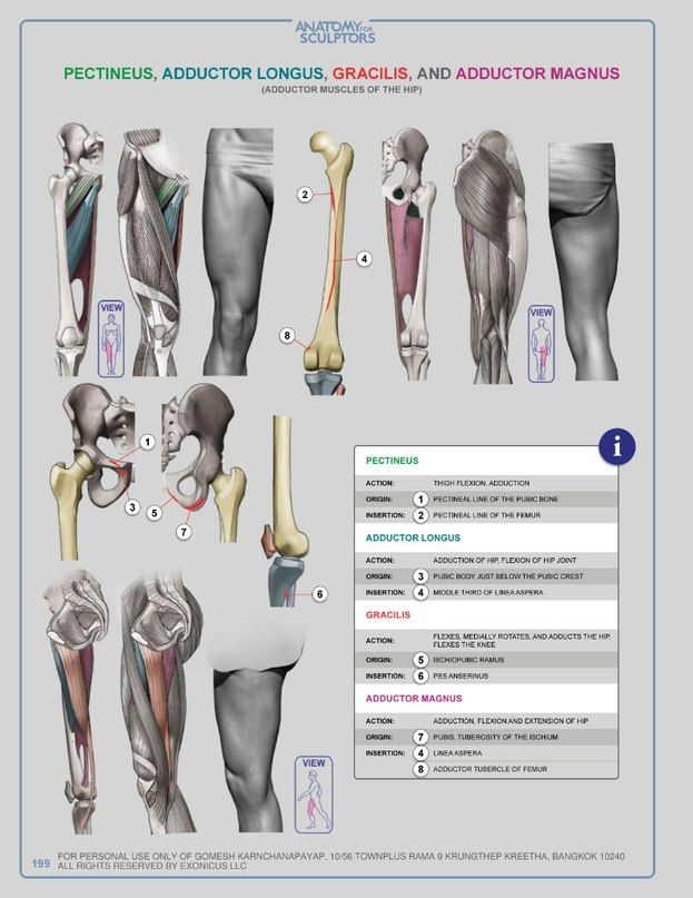 Pin de Todd Charron en Anatomy   Pinterest   Anatomía, Músculo ...