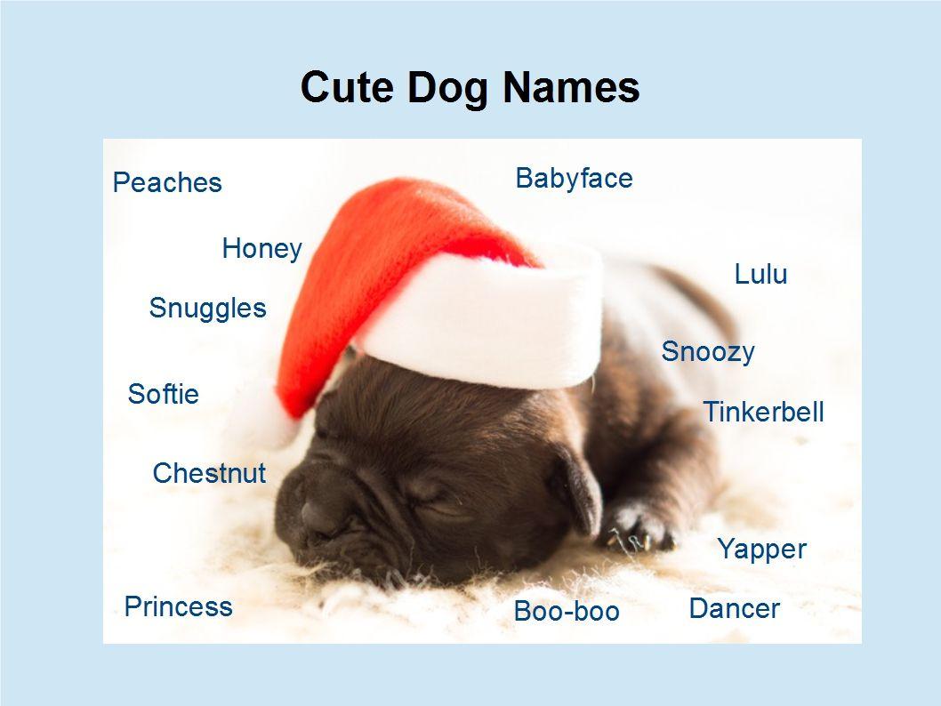 Funny Dog Names After Food
