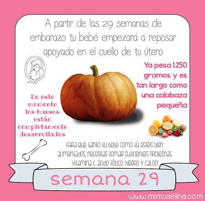 Semana 29 Embarazo Tamano Y Evolucion Del Bebe Mimuselina Con