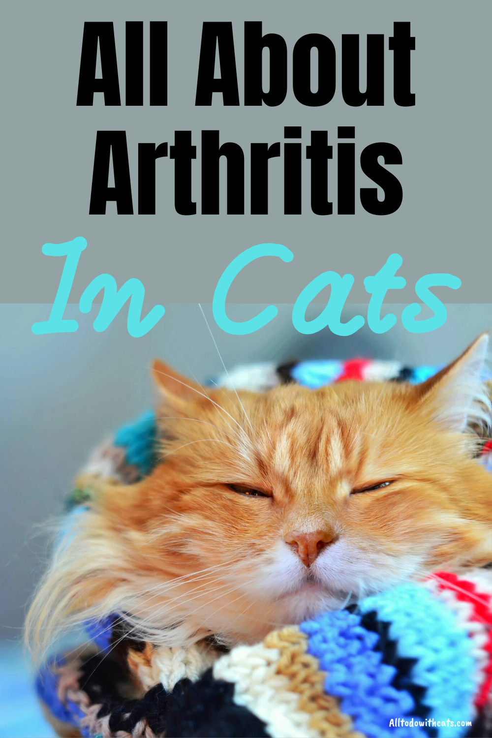 What Is Arthritis In Cats What You Need To Know In 2020 Pet Care Cats Senior Cat Care Kitten Care